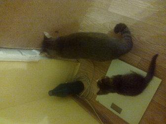 Уникальное изображение Отдам даром отдам котенка от домашней кошки 37614656 в Саратове