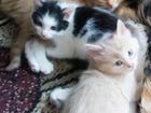 Новое изображение Отдам даром отдам котят 37994132 в Сатке