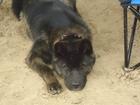Фото в Потерянные и Найденные Потерянные потерялась собака Северодвинск район заводского в Северодвинске 0