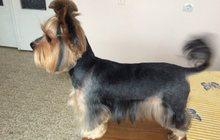 Груминг, Профессиональная стрижка собак