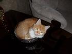 Увидеть фотографию Потерянные Пропал кот 36843141 в Шахты