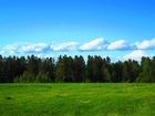 Изображение в   Сосны, березы, цветы, грибы на своём участке. в Иркутске 250000