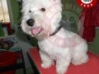 Изображение в Домашние животные Услуги для животных Профессиональная Стрижка домашних животных. в Симферополь 100