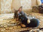Фото в Собаки и щенки Продажа собак, щенков 2 девочки и мальчик возраст 2 месяца кушают в Агрызе 1000
