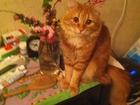 Свежее фото Вязка Беспородный красивый котик ищет подружку 35222254 в Волгограде