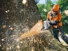 Фотография в Прочее,  разное Разное Профессионально и быстро уберем деревья  в Смоленске 0
