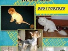 Скачать foto Услуги для животных Аккуратная стрижка собак и кошек 37661613 в Смоленске