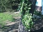 Скачать фотографию  веники для бани и сауны , Состояние отличное 66624632 в Смоленске