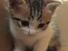 Скачать foto Отдам даром В добрые руки отдам котят 35851095 в Сочи
