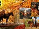 Скачать изображение Товары для туризма и отдыха Конные прогулки верхом в окрестностях Сочи, Катание на лошадях, Конный клуб Триумф Сочи 40166490 в Сочи