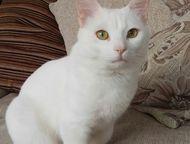 Ищу кошку для кота Очень добрый, ласковый, сообразительный кот. Обладает целител