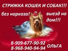 Новое фото Услуги для животных Стрижка животных на дом выезд 32876850 в Балашихе