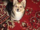 Фото в Собаки и щенки Продажа собак, щенков Отдадим в добрые руки домашнюю, умную, ласковую. в Ставрополе 0