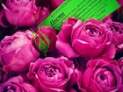Скачать фотографию Организация праздников оформление живыми и искусственными цветами - свадьбы, торжества, интерьеры 32530784 в Ставрополе