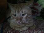 Уникальное foto Отдам даром - приму в дар Отдадим кота-мальчика в добрые руки 69248681 в Ставрополе