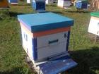 Фотография в   Проводим набор на курсы пчеловодства. Занятия в Стерлитамаке 1