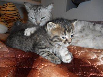 Новое фото Отдам даром Отдам котят в добрые руки 32733377 в Стерлитамаке