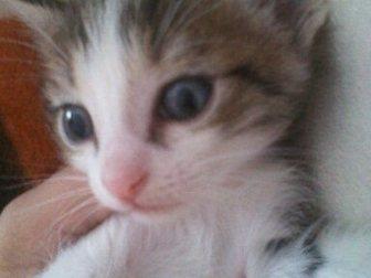 Просмотреть фотографию Продажа кошек и котят Отдадим котят в добрые руки! 33480557 в Стерлитамаке
