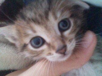 Смотреть фотографию Продажа кошек и котят Отдадим котят в добрые руки! 33480557 в Стерлитамаке