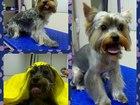 Фото в Собаки и щенки Стрижка собак Груминг салон Мерелен.   Мы будем рады в Ступино 1000