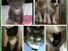 Фотография в   Милые котята в поиске ответственных и любящих в Сургуте 10