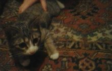 Отдам маленького котенка 4 месяца