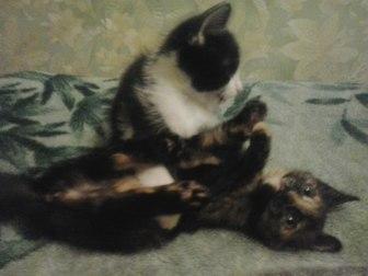 Скачать foto Отдам даром - приму в дар Отдам котят в хорошие руки 54379642 в Сыктывкаре