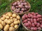 Смотреть фото  картофель на дом от 25кг 33145983 в Таганроге