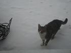 Изображение в   Пропал кот. возраст 1 год рн. Энергетической/Поляковско в Таганроге 0