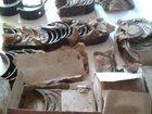 Смотреть изображение Автозапчасти Вкладыши тракторных двигателей СМД-60 32840459 в Тамбове