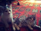 Фото в Отдам даром - Приму в дар Отдам даром Отдам котенка заботливым людям. Котенок полосатенький. в Тюмени 0