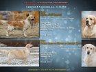 Фотография в Собаки и щенки Продажа собак, щенков Предлагаются к продаже замечательные перспективные в Тюмени 30
