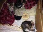 Фотография в Отдам даром - Приму в дар Отдам даром Трое мальчишек ищут новый дом. Котятам 1, в Тюмени 0