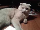 Скачать фотографию  Вязка с котом 38817263 в Тюмени