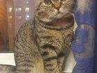 Фотография в Кошки и котята Вязка Ласковый, общительный котик. в Когалыме 0