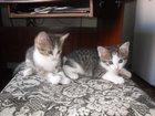 Фотография в Отдам даром - Приму в дар Отдам даром Котёнки ласковые, к лотку приучены, очень в Тольятти 0