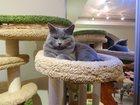 Фото в Потерянные и Найденные Потерянные Пожалуйста, помогите найти кота! Пропал в в Тольятти 1000