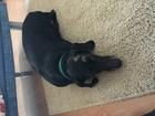 Уникальное foto  Пропала собака породы такса, Кобель чёрного цвета 60077641 в Тольятти