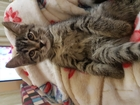 Смотреть foto  Кошечка в дар 37789173 в Томске