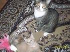 Новое фотографию Отдам даром - приму в дар Отдам даром котов в добрые заботливые руки 52429441 в Томске