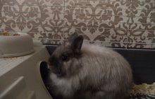 кролика продам
