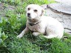 Фото в Собаки и щенки Продажа собак, щенков Ищем семью, дом для маленькой собачки. Беленькая. в Туле 0
