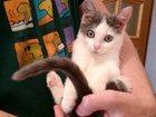 Фото в Кошки и котята Продажа кошек и котят Отдам в добрые руки котенка, девочку. Малышке в Туле 0