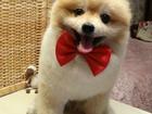 Скачать изображение  стрижка собак и кошек в Туле ( груминг) 40048600 в Туле