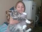 Скачать фотографию Вязка кошек ищем кота для вязки оплата котёнком 67710926 в Туле