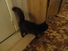 Уникальное фото  Найдена черная домашняя кошка 50965334 в Твери