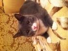 Скачать бесплатно фото Потерянные Потерялся кот! 39356957 в Удомле