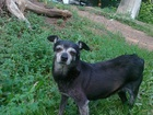 Фотография в Потерянные и Найденные Потерянные Найдена собака в Черниковке , около м-на в Уфе 0