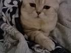 Уникальное foto Вязка Вязка с красивым, вислоухим котом 37300832 в Уфе