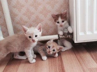 Скачать foto  Отдам котят в хорошие руки 36971896 в Уфе